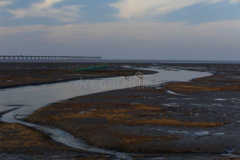 Guld- havsväxt, förtjänar i den tidvattens- lägenheten, den längsta bron i världen royaltyfri bild