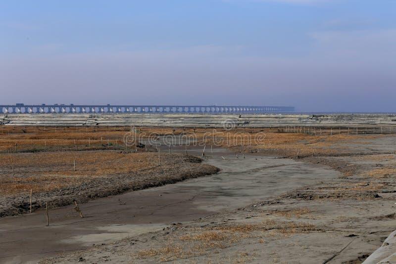 Guld- havsväxt, förtjänar i den tidvattens- lägenheten, världens den längsta kors-hav bron - hangzhou fjärdbro arkivfoto