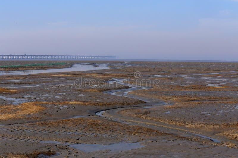 Guld- havsväxt, förtjänar i den tidvattens- lägenheten, världens den längsta kors-hav bron - hangzhou fjärdbro royaltyfri fotografi