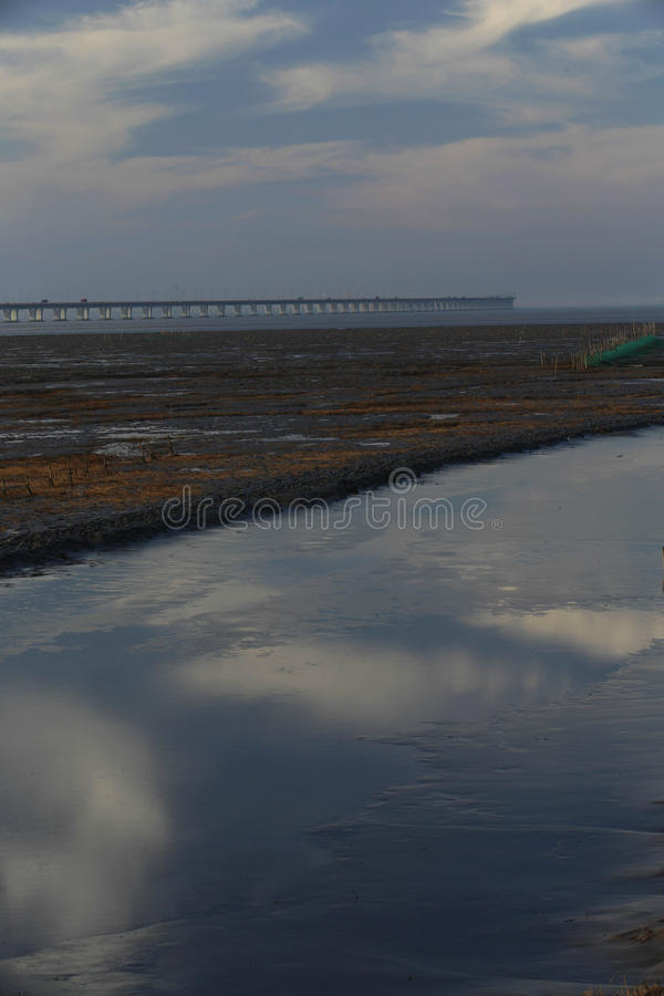 Guld- havsväxt, förtjänar i den tidvattens- lägenheten, världens den längsta kors-hav bron - hangzhou fjärdbro royaltyfria bilder