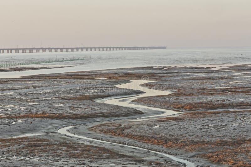 Guld- havsväxt, förtjänar i den tidvattens- lägenheten, världens den längsta kors-hav bron - hangzhou fjärdbro arkivbilder