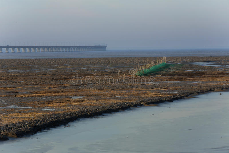 Guld- havsväxt, förtjänar i den tidvattens- lägenheten, världens den längsta kors-hav bron - hangzhou fjärdbro arkivfoton