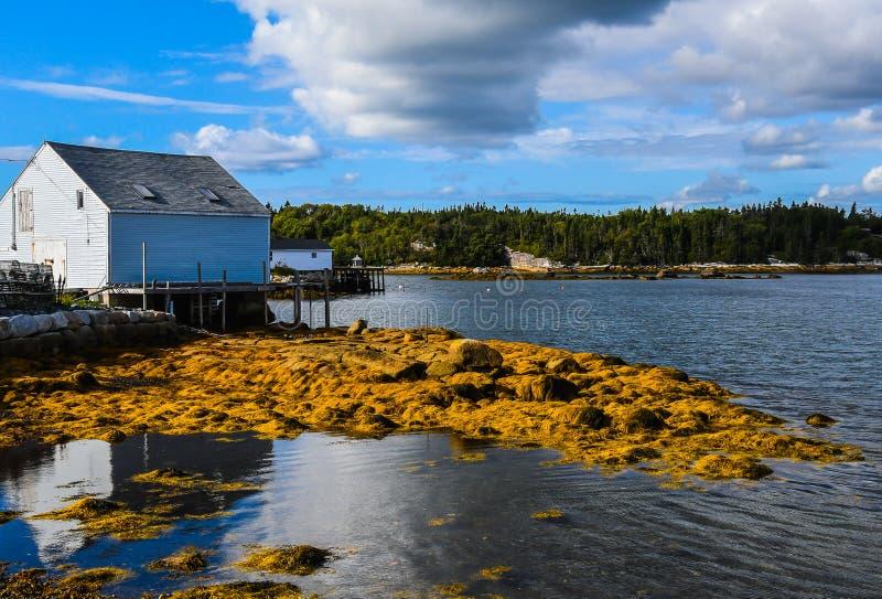 Guld- havsväxtfilt arkivfoton