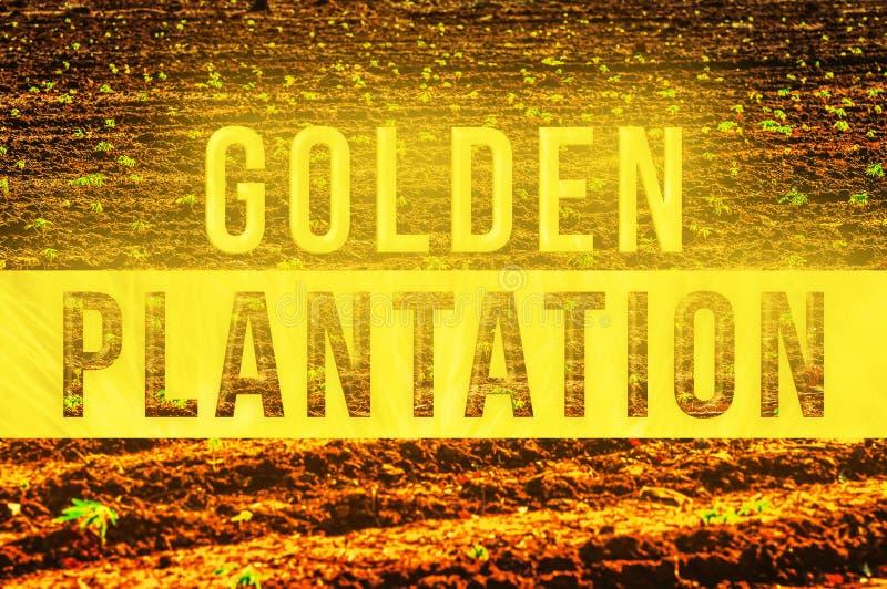 Guld- koloni stock illustrationer
