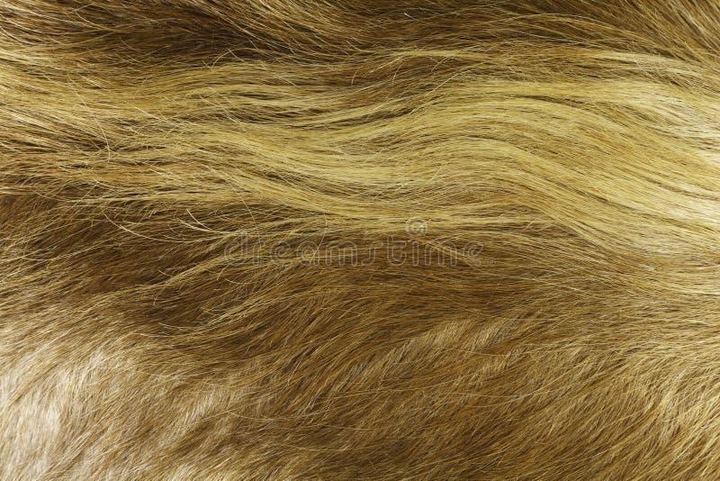 Guld- koskinnbakgrund royaltyfri bild