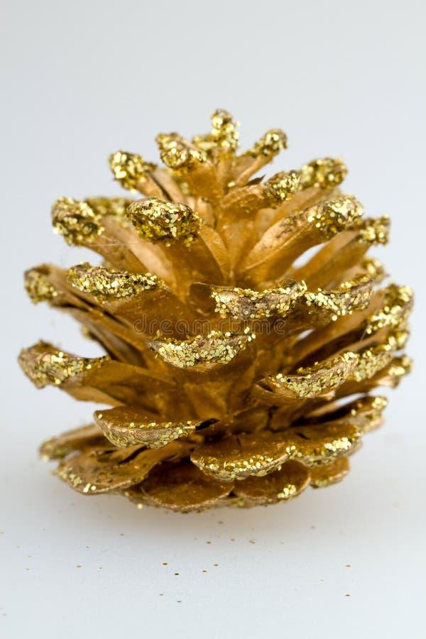 guld- kotte royaltyfri bild