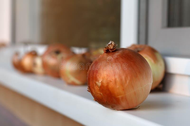Download Guld- Lökar På En Fönsterfönsterbräda Arkivfoto - Bild av fönster, skörd: 78726360