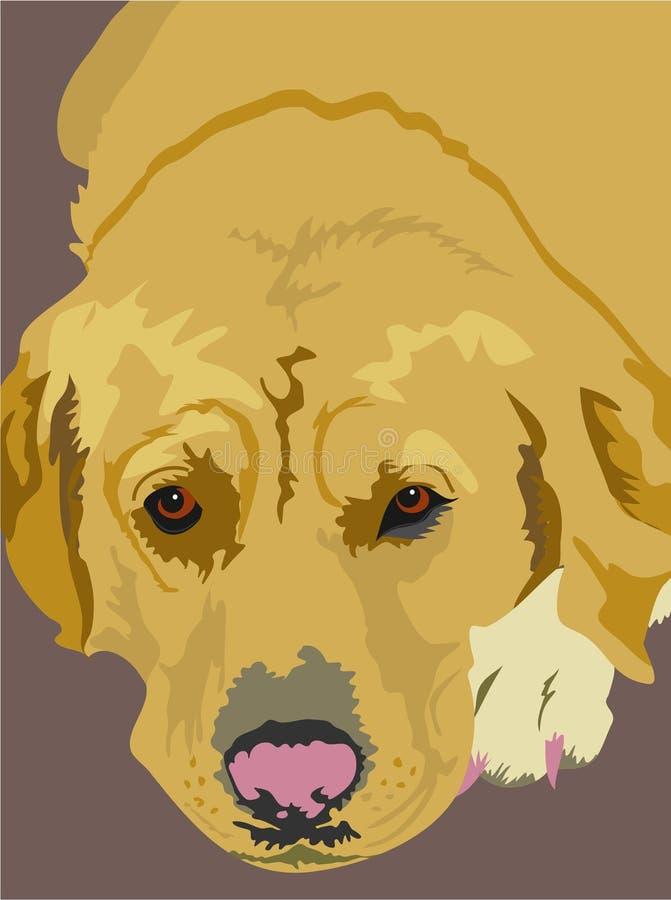 guld- labrador stock illustrationer