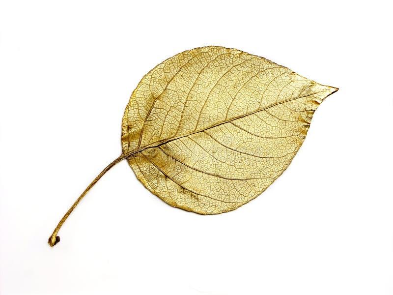 guld- leaf arkivfoto