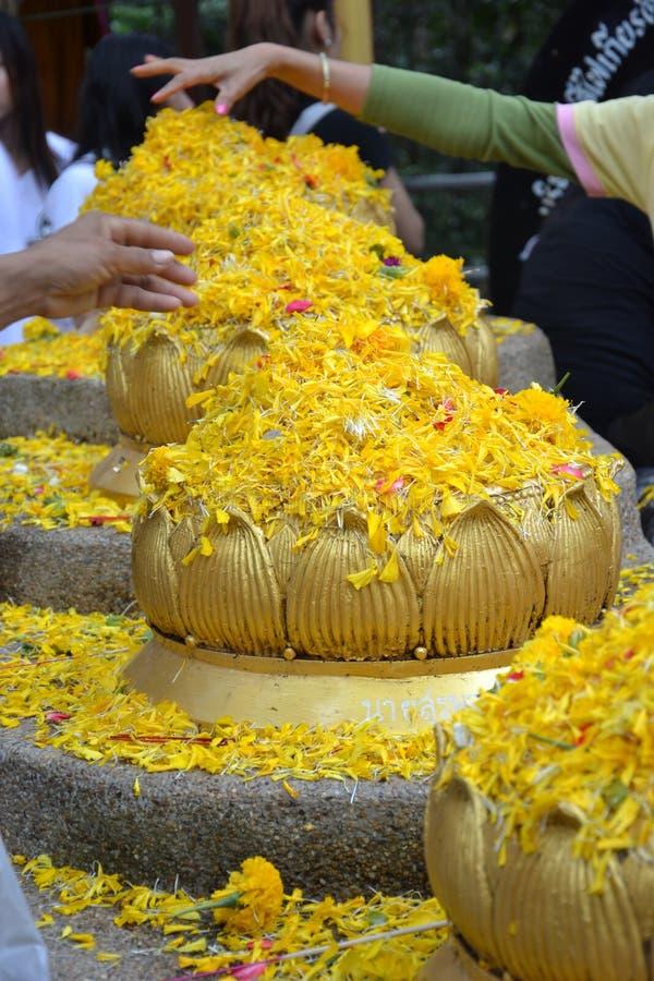 Guld- Lotus blommor arkivbild