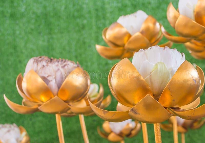Guld- lotusblomma royaltyfri fotografi
