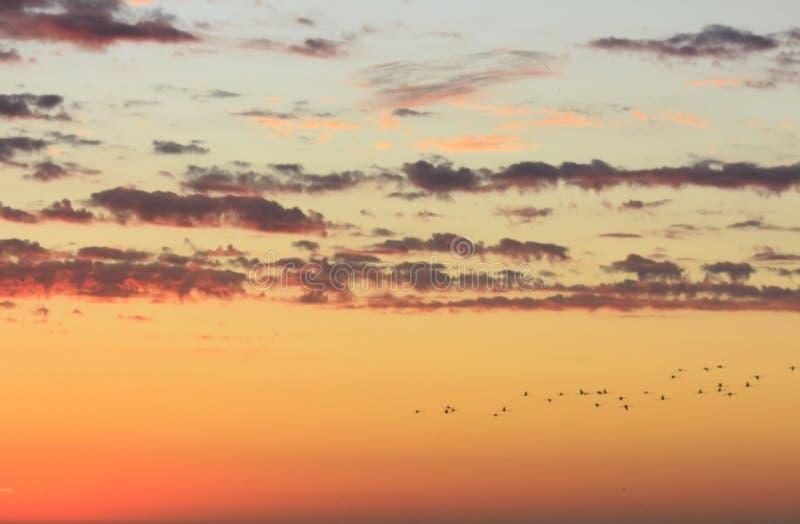 Guld- molnig himmel för härligt solnedgånglandskap och flygfåglar arkivfoto