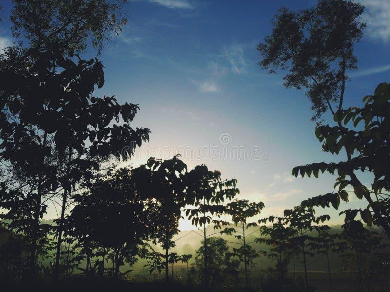 guld- morgon royaltyfri foto