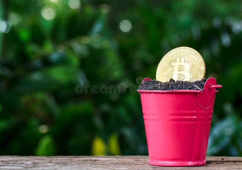 Guld- myntbitcoin i kruka- och naturbakgrund affärsconce arkivfoto