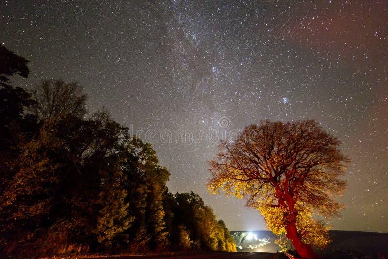 Guld- och röda träd under svart stjärnklar himmel och ljusa ljus av arkivbild
