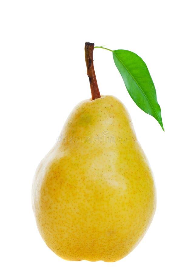 guld- pear royaltyfri bild