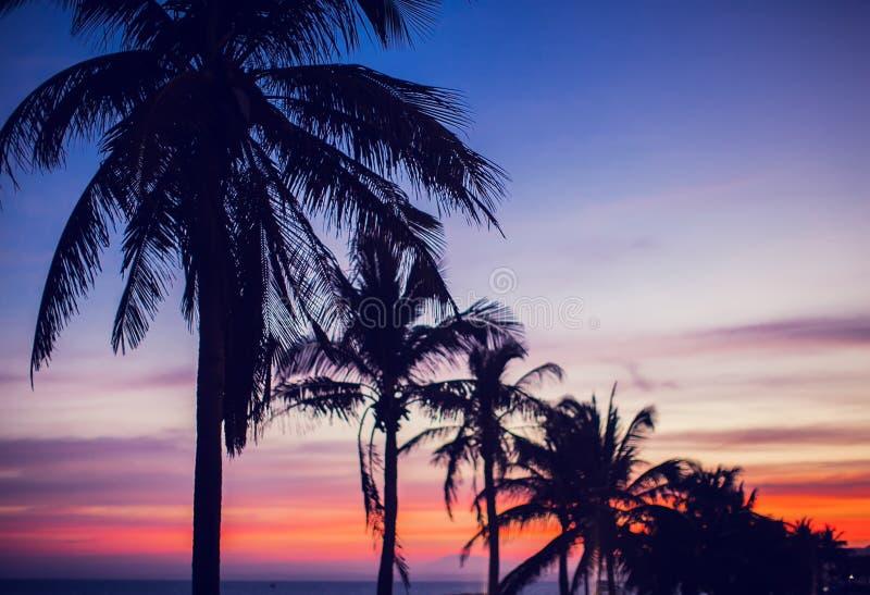 Guld- röd blå himmel för palmträdsolnedgång arkivbild