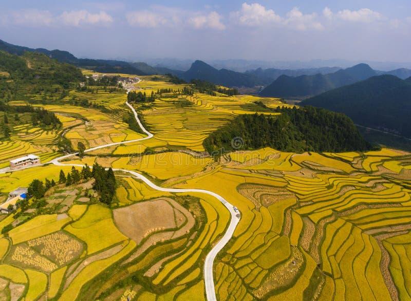 Guld- risfält i berget royaltyfria bilder