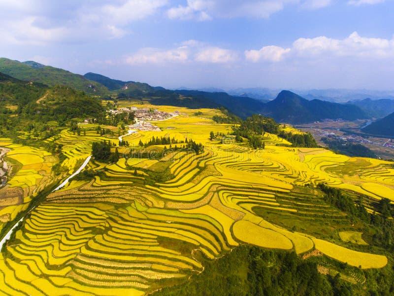 Guld- risfält i berget arkivbild