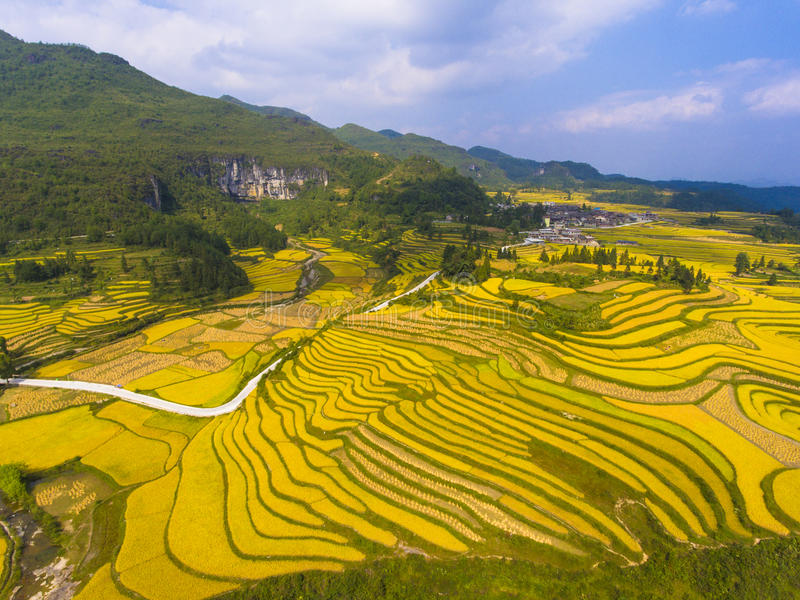 Guld- risfält i berget royaltyfri bild