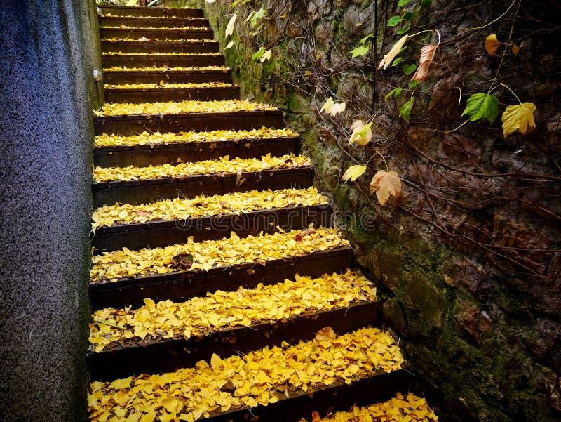 Guld- sidor på trappa arkivfoton