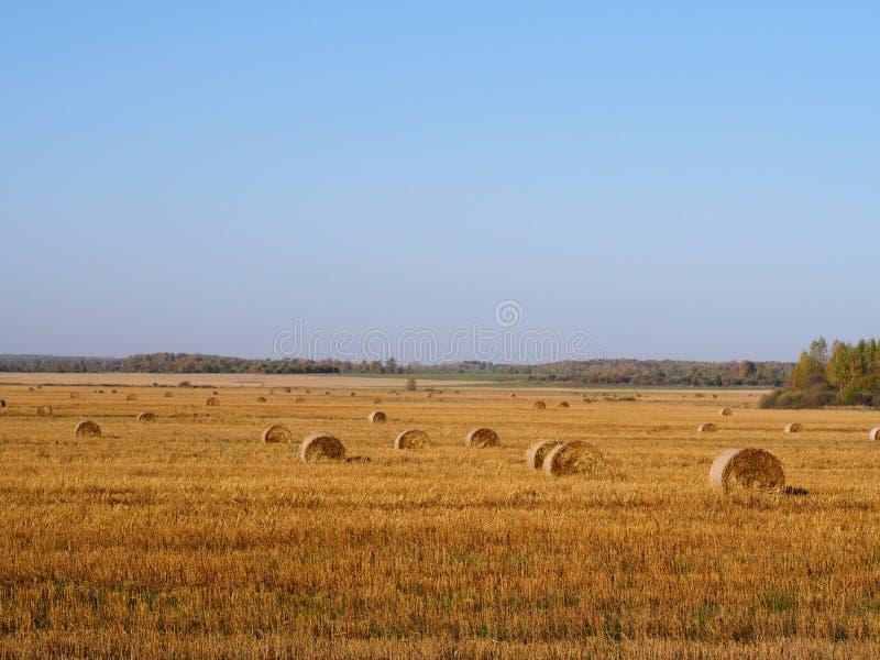 Guld- skördat sädes- fält, sugrörbaler, höstjordbruk b royaltyfria foton