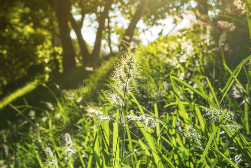 Guld- sol över ett blommafält arkivfoton
