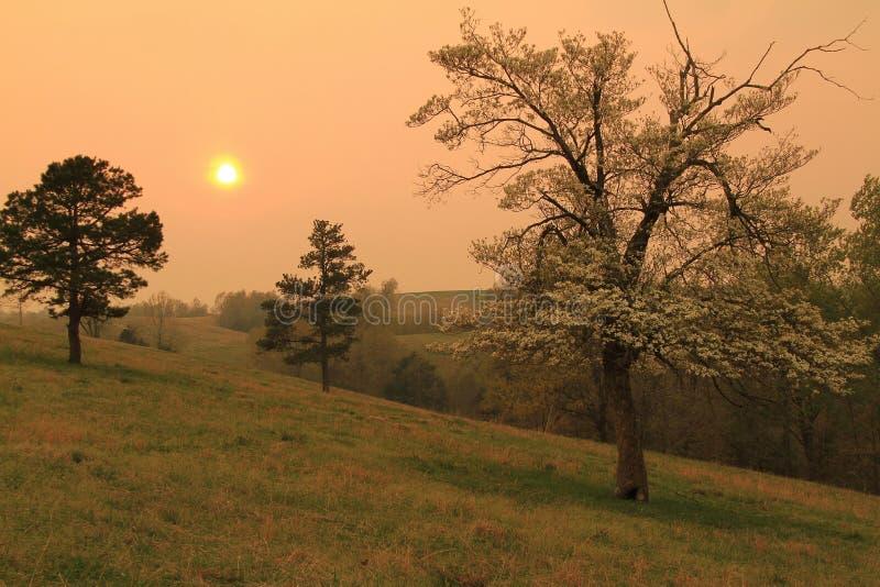 Guld- solnedgång med skogskornell i blom royaltyfri foto