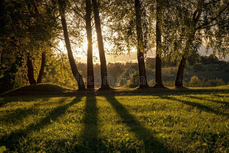 Guld- solnedgång och moln till och med björkträd arkivbilder