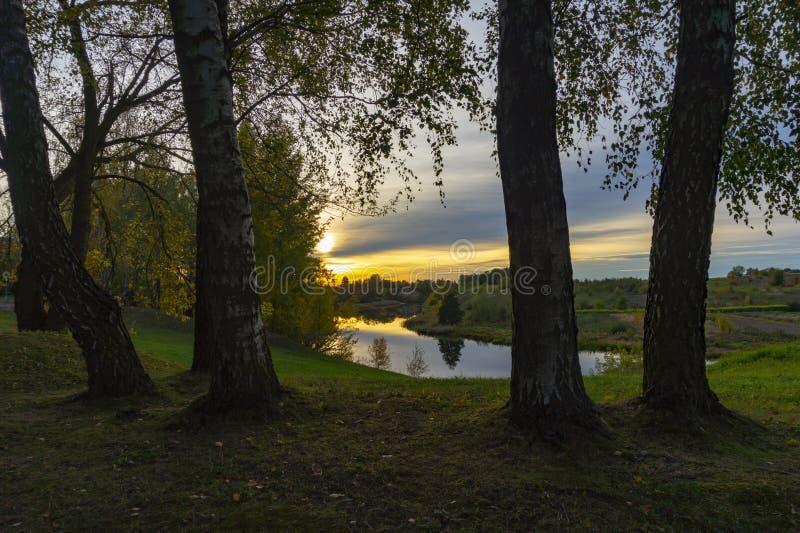 Guld- solnedgång och moln till och med björkträd royaltyfria foton