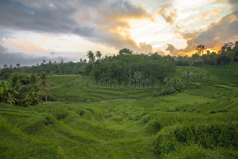 Guld- solnedgång på Jatiluwih Bali arkivfoto