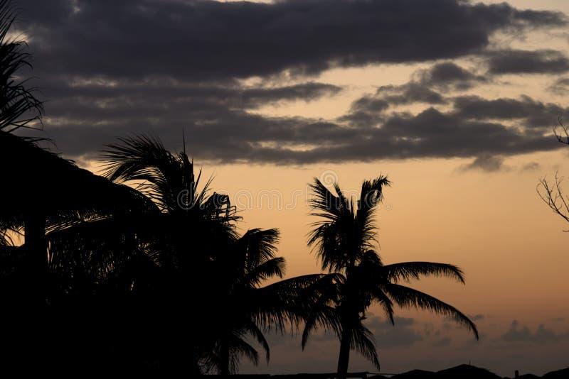 Guld- solnedgånghimmel i Kuba med skugga av palmträd arkivbilder