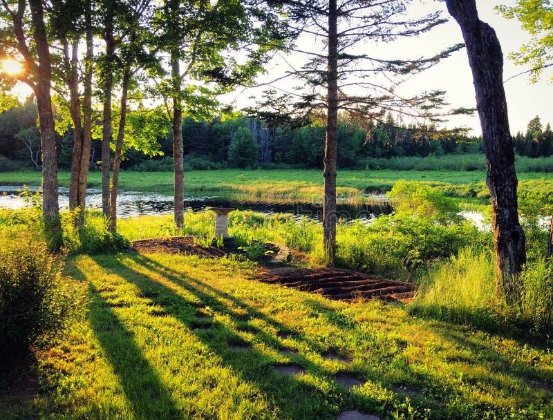 Guld- solnedgångljus som skiner till och med träd på trädgård royaltyfria bilder