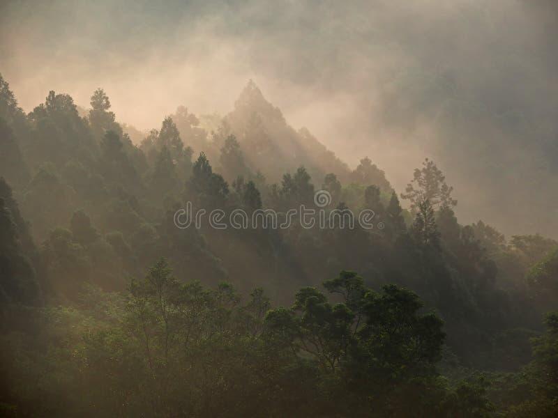 Guld- solsken ovanför skogen, i avbrott av gryning arkivfoto
