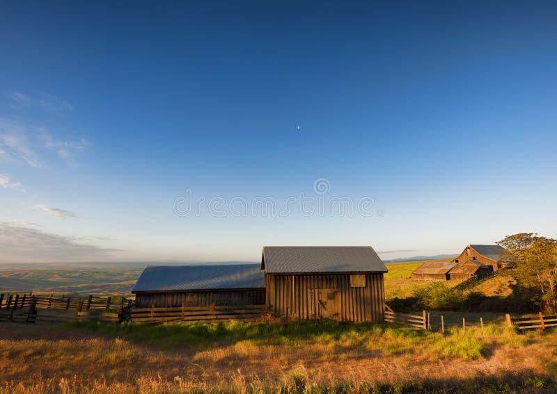 Guld- timme på Dallas Mountain Ranch på den Columbia Hills staten royaltyfria foton