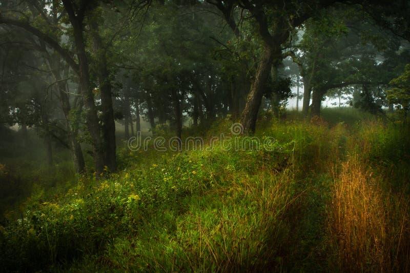 guld- trail arkivbilder