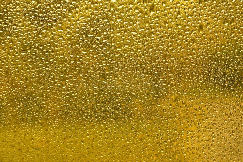 Guld- vattendroppar royaltyfri bild
