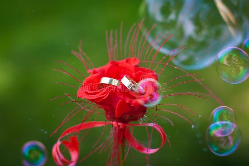 Guld- vigselringar i en röd rosblomma arkivfoton