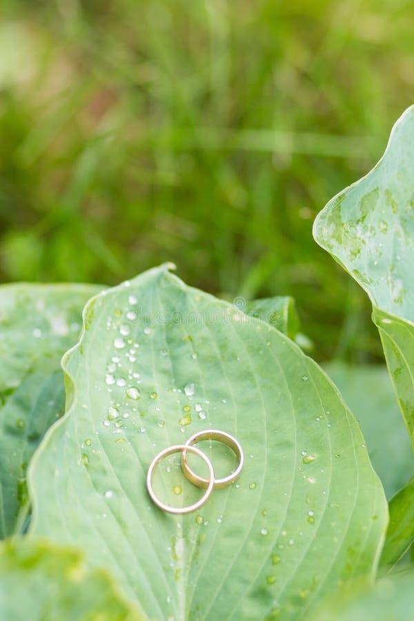 Guldbröllop ringer med snigeln på det stora gröna bladet Par av guldbröllopcirklar med diamanter på växten Symbol av royaltyfri bild