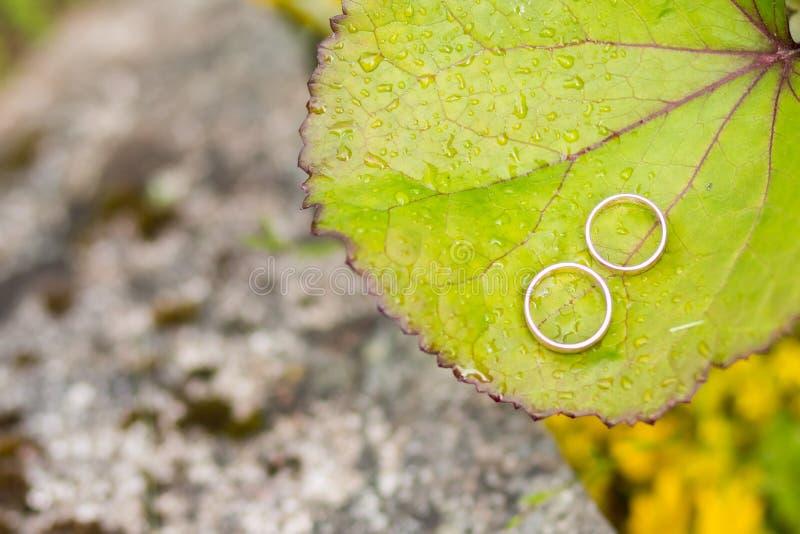 Guldbröllop ringer med snigeln på det stora gröna bladet Par av guldbröllopcirklar med diamanter på växten Symbol av royaltyfri fotografi
