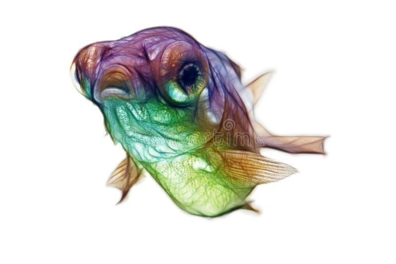 Guldfisk för Fractalteleskopsmåfisk royaltyfria foton