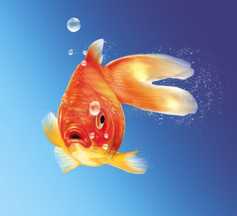 Guldfisk med några vattenbubblor. arkivfoton