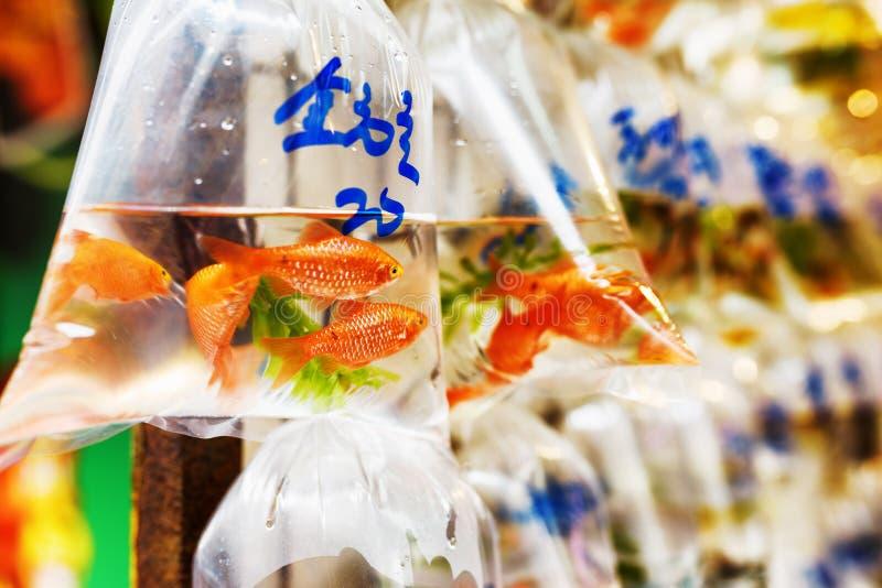 Guldfiskar i plastpåsar royaltyfri foto