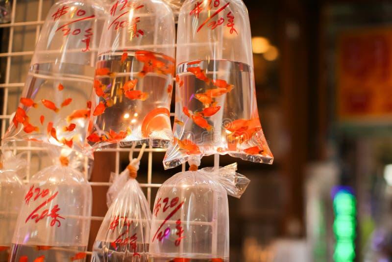 Guldfiskar och olika fiskar för akvarium i plastpåsar hängde på väggen i ett älsklings- shoppar att sälja i Hong Kong royaltyfria foton