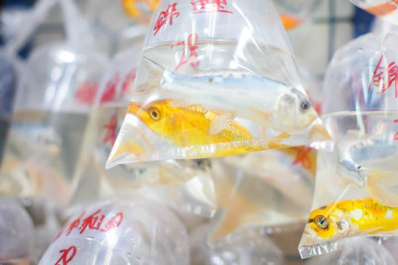 Guldfiskar och olika fiskar för akvarium i plastpåsar hängde på väggen i ett älsklings- shoppar att sälja i Hong Kong fotografering för bildbyråer