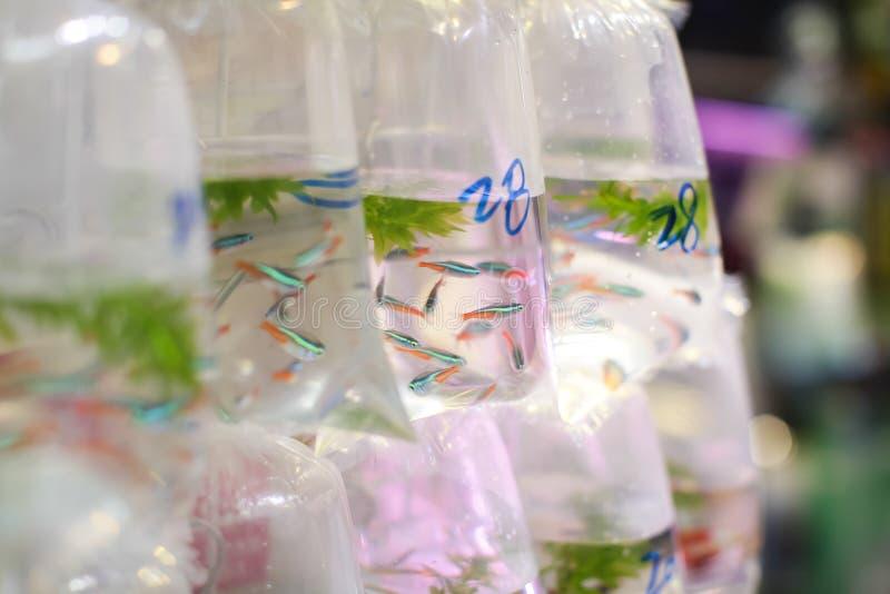 Guldfiskar och olika fiskar för akvarium i plastpåsar hängde på väggen i ett älsklings- shoppar att sälja i Hong Kong royaltyfria bilder