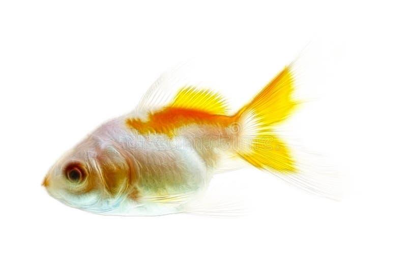 GuldfiskFractals som isoleras på vit arkivfoton