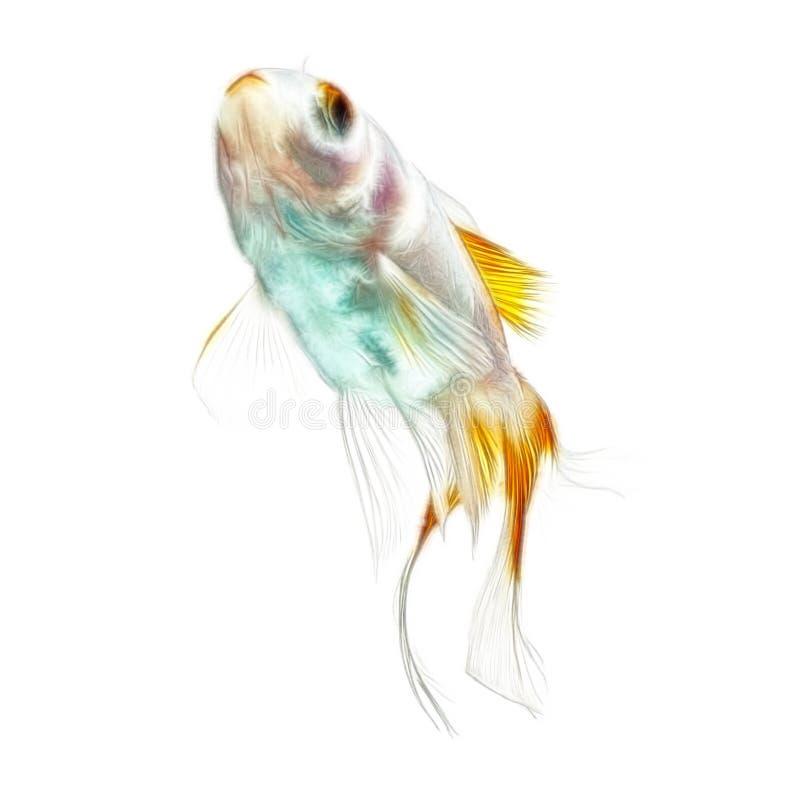 GuldfiskFractals som isoleras på vit royaltyfri fotografi