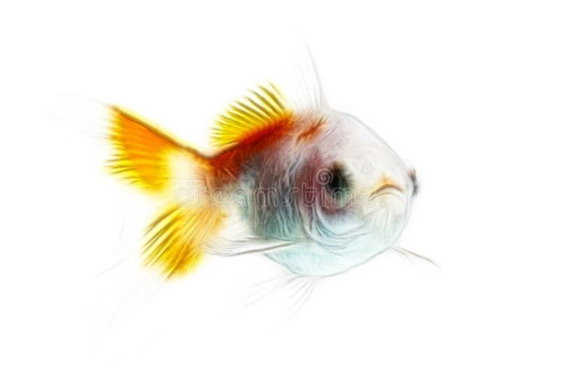 GuldfiskFractals som isoleras på vit royaltyfri bild