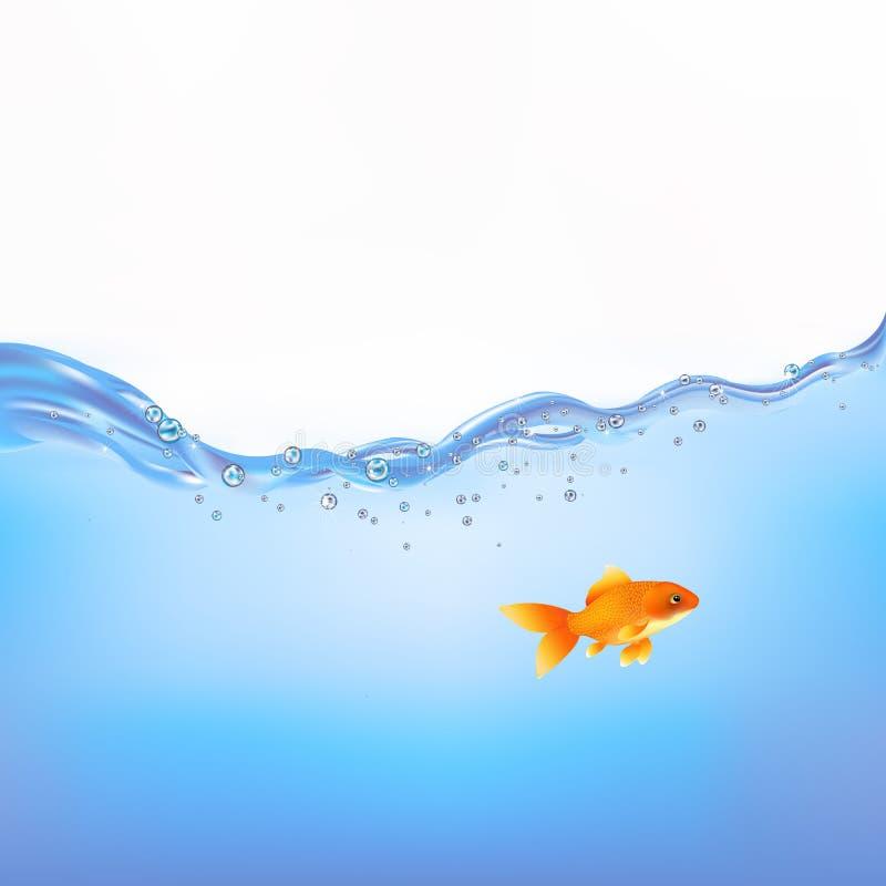 guldfiskvektorvatten royaltyfri illustrationer